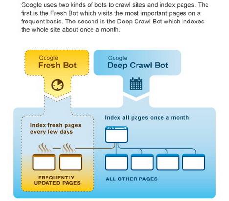google_organic_crawl_best_seo_infographics