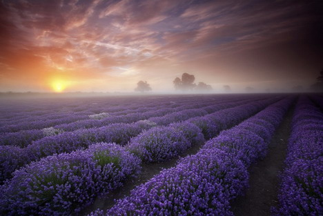 lavender_sunrise_by_antony_spencer_beautiful_nature_landscapes_photographs