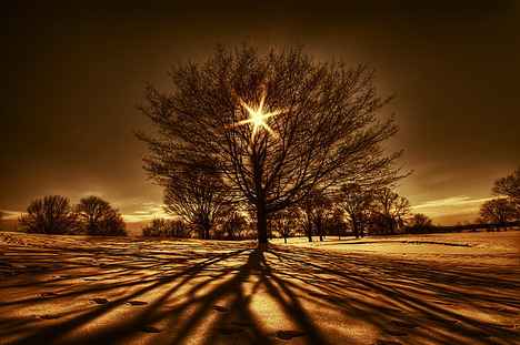 tree_of_light_beautiful_nature_landscapes_photographs