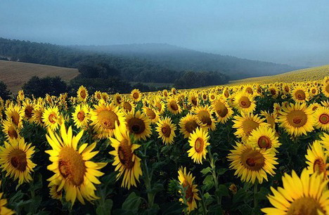 vittorio_beautiful_nature_landscapes_photographs