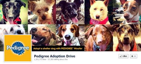 pedigree_adoption_drive