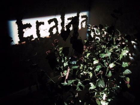 tralalala_artificial_trees_shadow