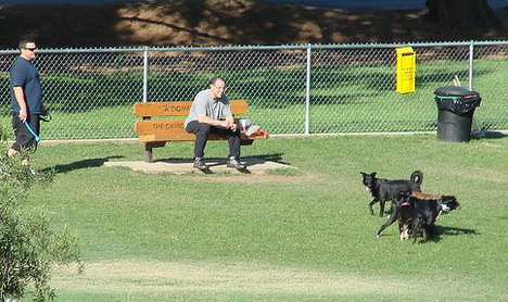best_apps_to_find_dog_parks