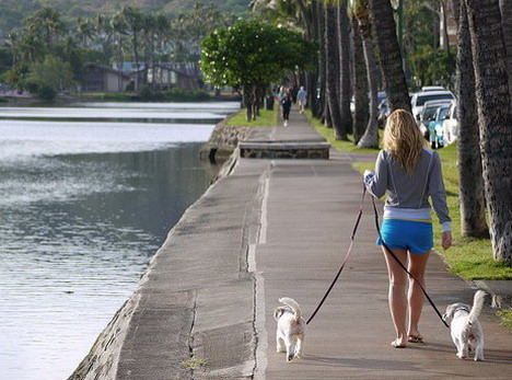 best_apps_to_get_fit_with_your_pet