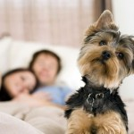 5 Useful Apps for Pet Lovers