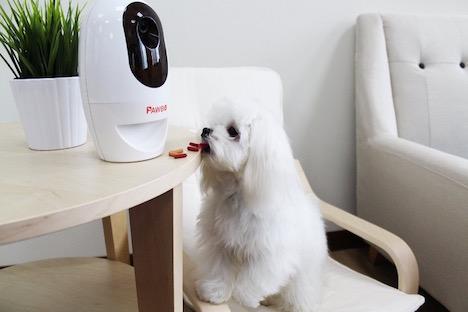 pawbo-wifi-pet-cam