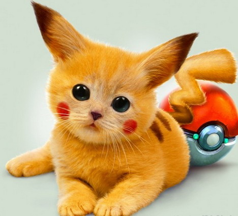 real-life-pikachu-cat-1
