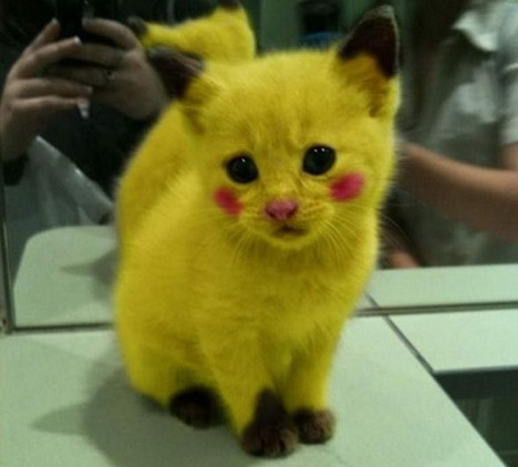 real-life-pikachu-cat-2