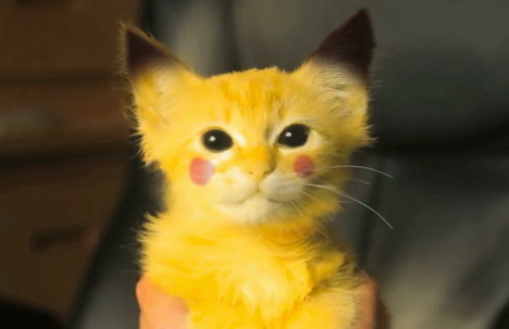 real-life-pikachu-cat-4