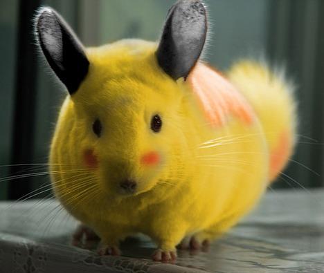 real-life-pikachu-chincilla
