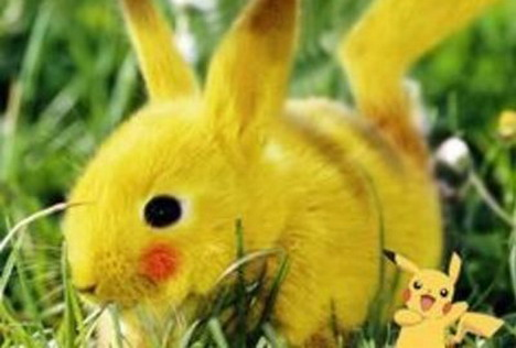 real-life-pikachu-rabbit-2