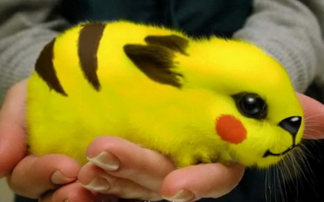 real-life-pikachu-rabbit-3
