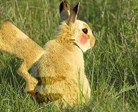 real-life-pikachu-rabbit-4