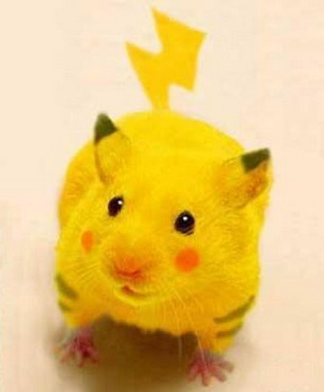 real-life-pikachu-rat-1