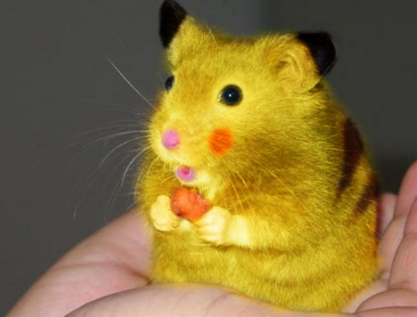 real-life-pikachu-rat-2