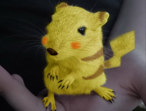 real-life-pikachu-rat-4