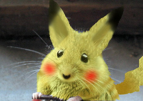 real-life-pikachu-rat-5
