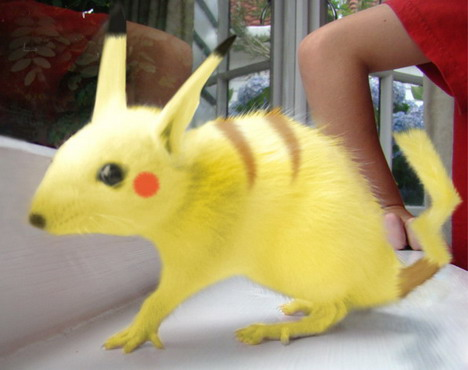 real-life-pikachu-rat-6