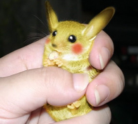 real-life-pikachu-rat-7