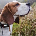 Top 15 Best GPS Pet Trackers for Dogs and Cats