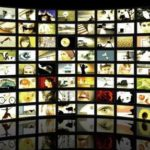 Top 20 Free Sites to Download High-Quality Stock Videos