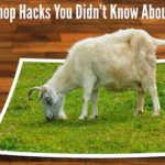 20 Photoshop Hacks You Didn't Know About