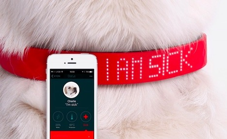 smart-collar-for-pets