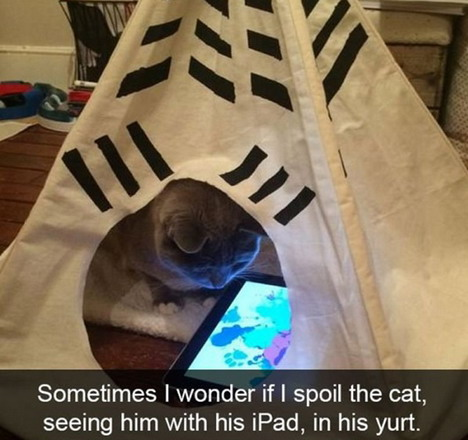 the-spoiled-cat