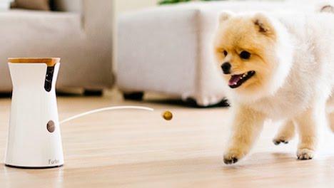best-dog-cat-pet-safety-gadget-app