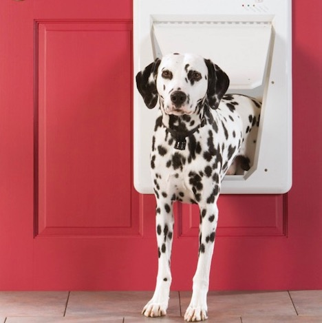 electronic-pet-smart-door