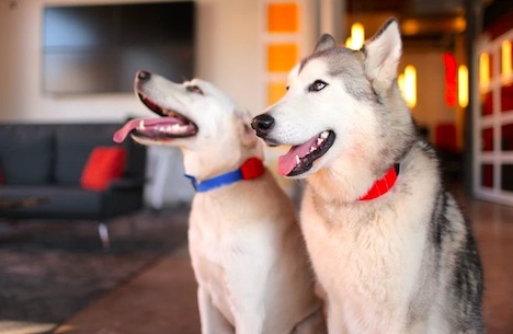 wuf-smart-dog-collar
