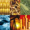 5 Websites to Check Commodity and Futures Quotes in Real Time